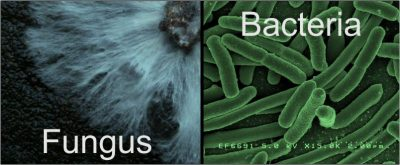 why clean bins - fungus and bacteria images