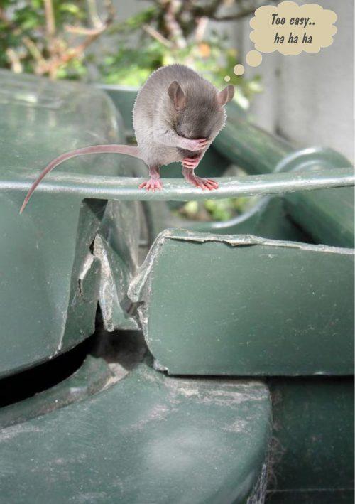 mouse on bin