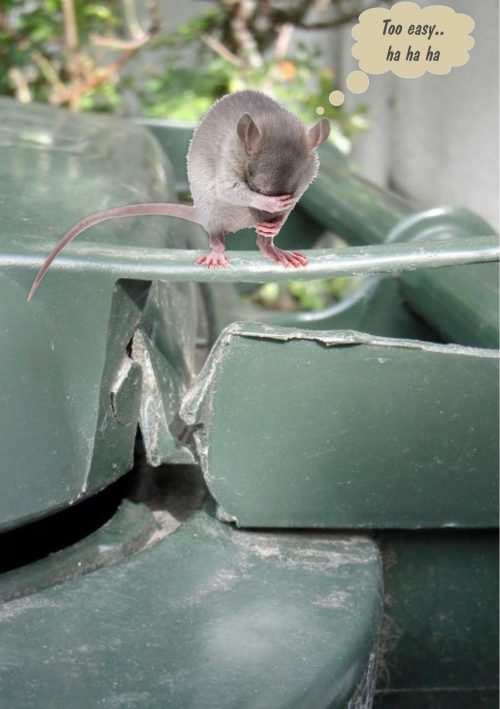 mouse on bin